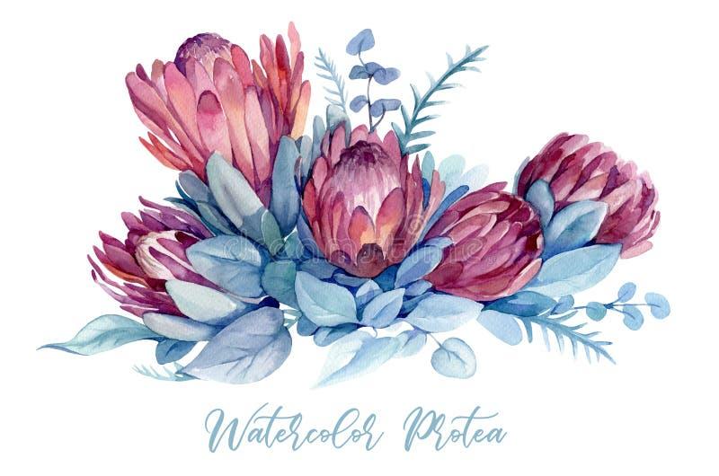 Waterverfillustratie met exotische bloemen en bladeren van protea, eucalyptus stock illustratie