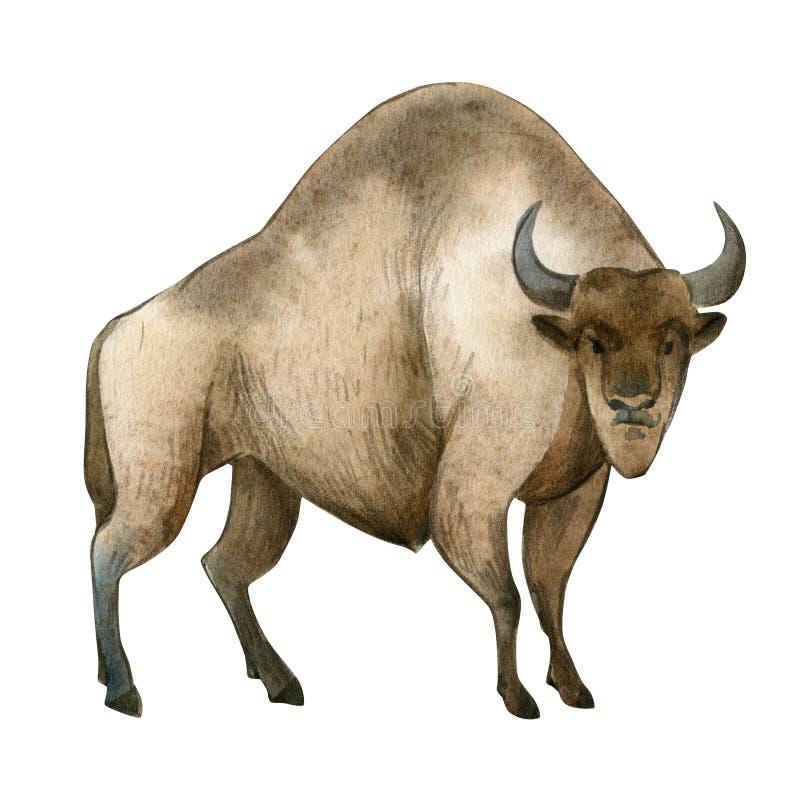 Waterverfillustratie op witte achtergrond Reeks van reusachtige bruine bizon Eenvoudige schets van wilde bosdieren royalty-vrije illustratie