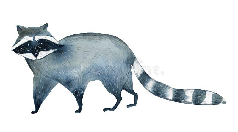 Waterverfillustratie op witte achtergrond Reeks van wasbeer Eenvoudige schets van wilde dieren stock illustratie