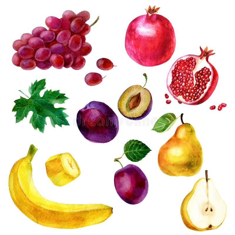 Waterverfillustratie, reeks Beeld van vruchten, druiven, banaan, granaatappel, pruim en peer stock illustratie