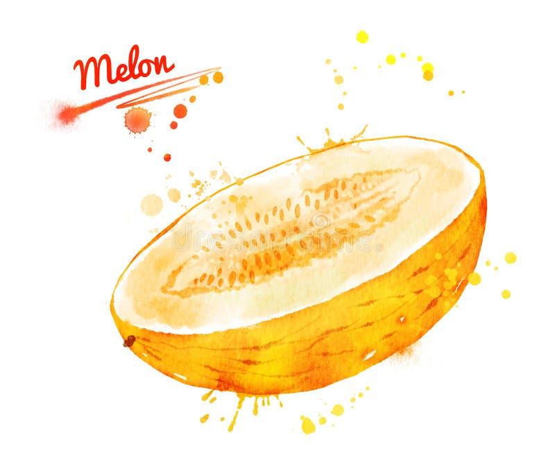 Waterverfillustratie van de helft van meloen royalty-vrije illustratie