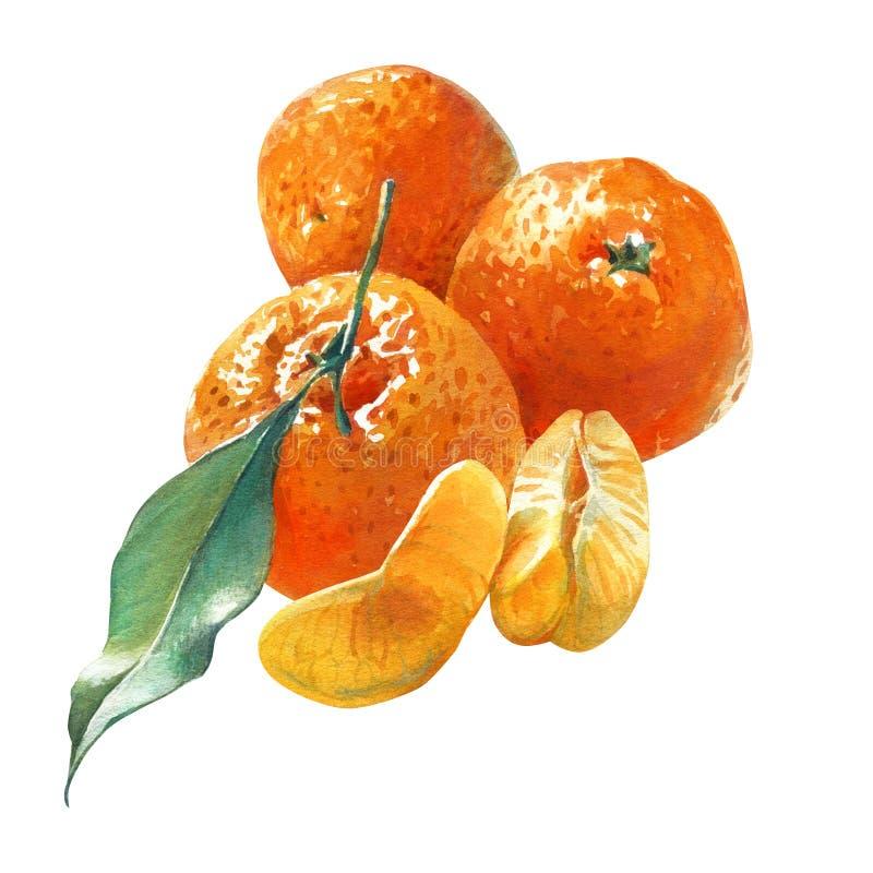 Waterverfillustratie van drie mandarins met groen die blad op wit wordt geïsoleerd royalty-vrije stock fotografie