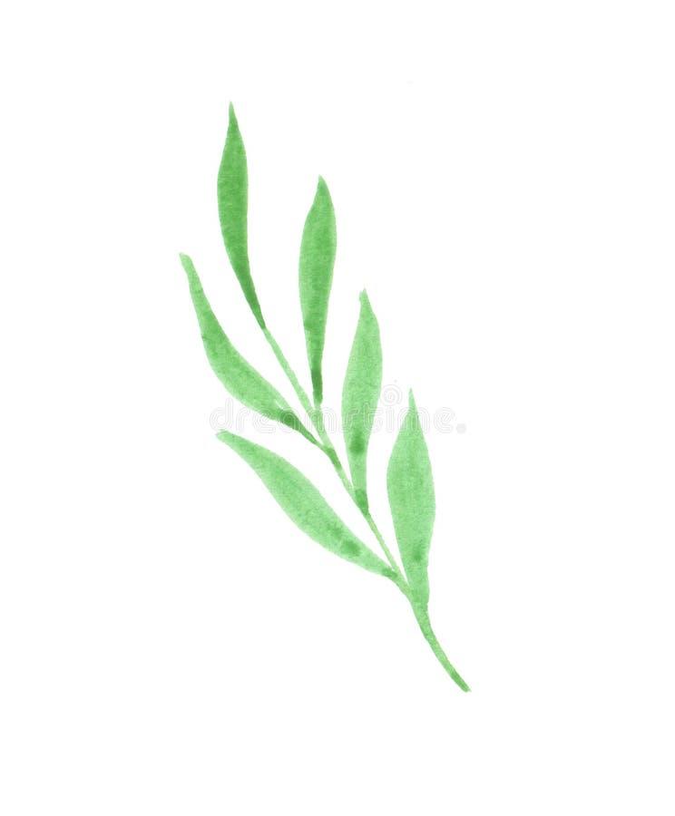 Waterverfillustratie van een twijg met groene bladeren royalty-vrije illustratie