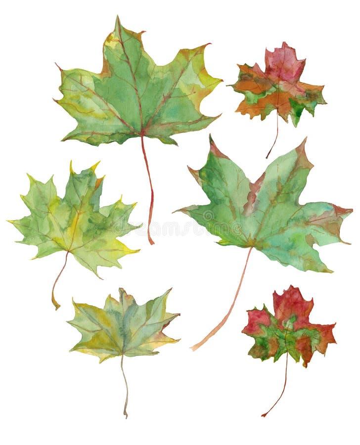 Waterverfillustratie van esdoornbladeren in natuurlijke kleuren stock illustratie