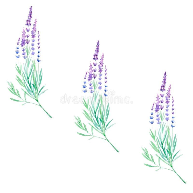 Waterverfillustratie van lavendelbloemen Geïsoleerdj op witte achtergrond Naadloos patroon royalty-vrije illustratie