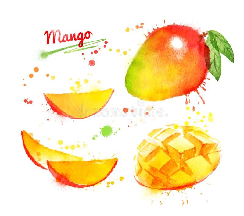 Waterverfillustratie van mango stock illustratie