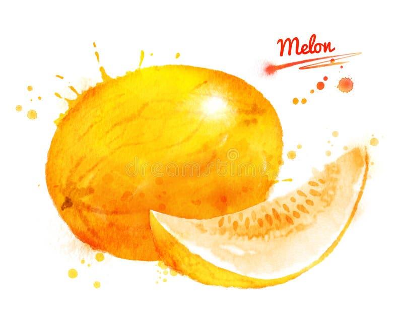 Waterverfillustratie van meloen vector illustratie