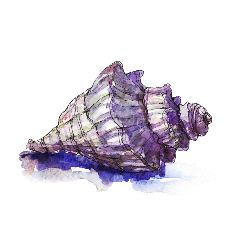 Waterverfillustratie van overzeese shells stock illustratie