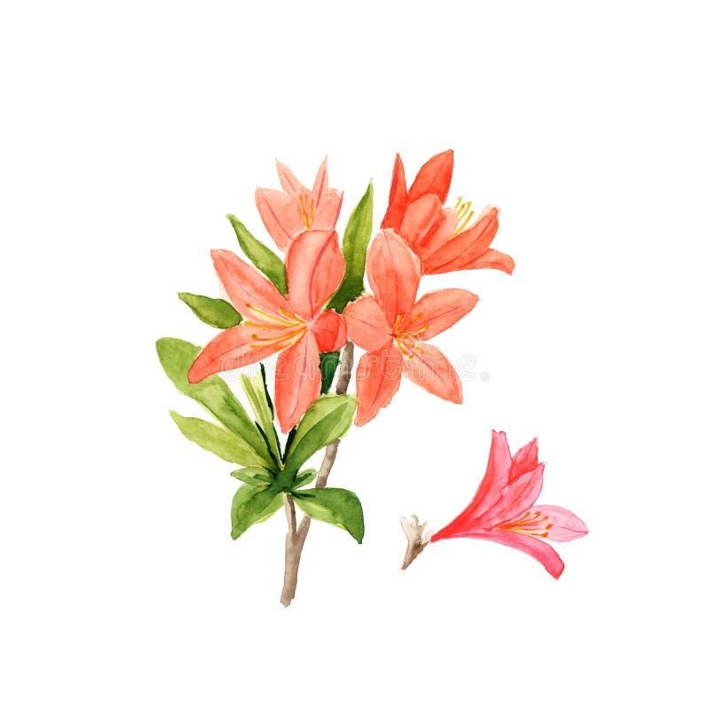 Waterverfillustratie van roze rododendronbloemen en bladeren op wit stock illustratie