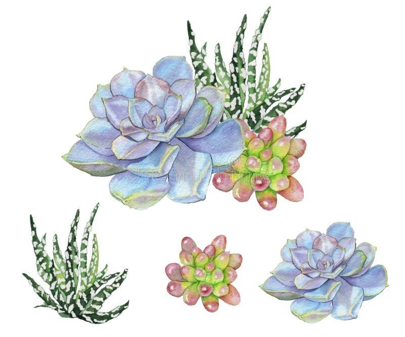 Waterverfillustratie van succulents royalty-vrije illustratie