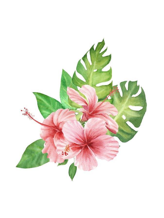 Waterverfillustratie van tropische installaties boeket met van de monsterablad en hibiscus bloemen die op witte achtergrond worde stock illustratie