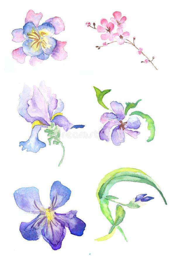 Waterverfillustratie van variuosbloemen - sakura, iris, viooltje vector illustratie