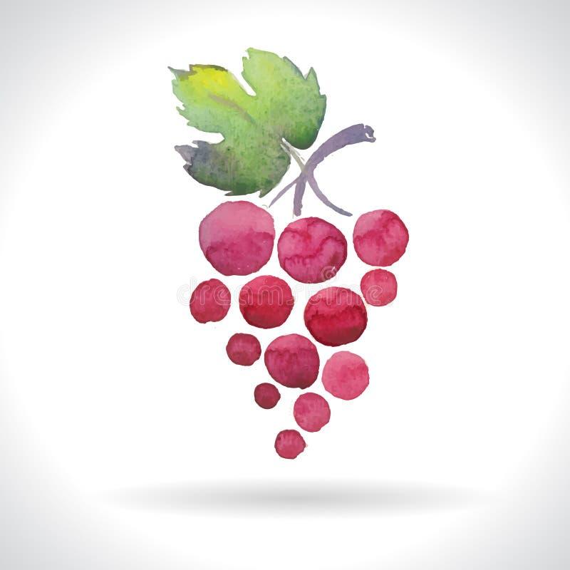 Waterverfillustraties van druiven vector illustratie