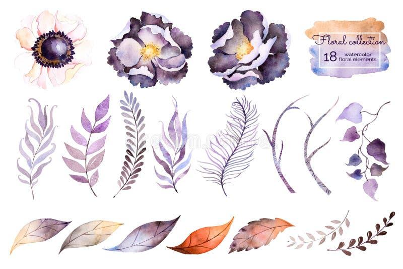 Waterverfinzameling met bloem royalty-vrije illustratie