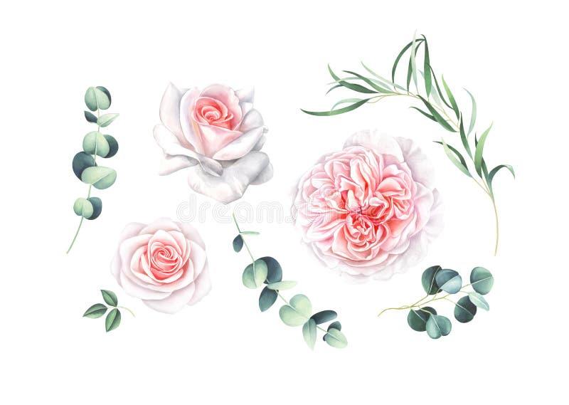 Waterverfinzameling van roze die rozen en eucalyptustakken op witte achtergrond worden geïsoleerd royalty-vrije illustratie