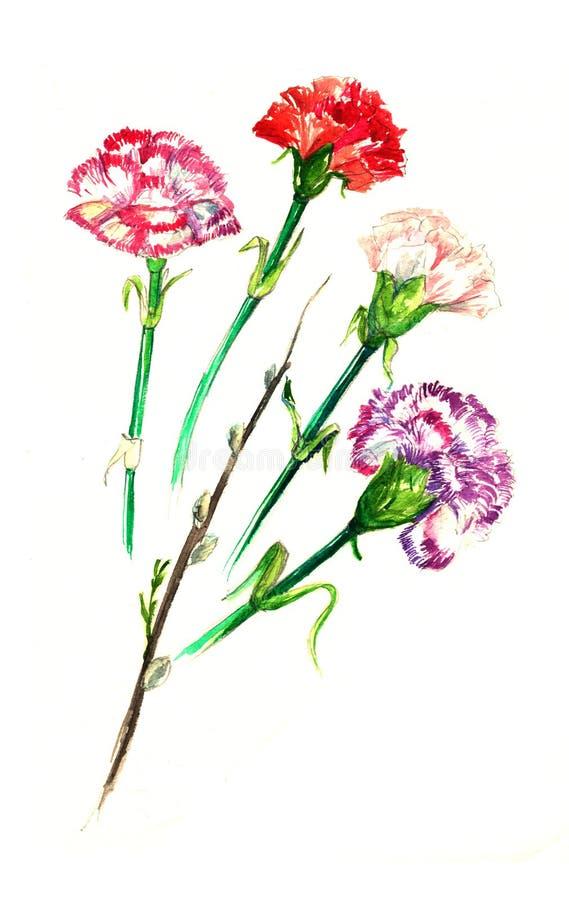 Waterverfkaart met een beeld van de kruidnagelbloem Anjersbloemen stock illustratie
