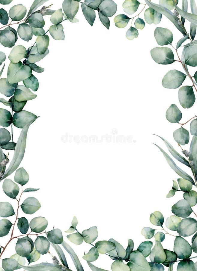 Waterverfkader met eucalyptusbladeren De hand schilderde baby, gezaaide en zilveren van de dollareucalyptus tak op wit wordt geïs royalty-vrije illustratie