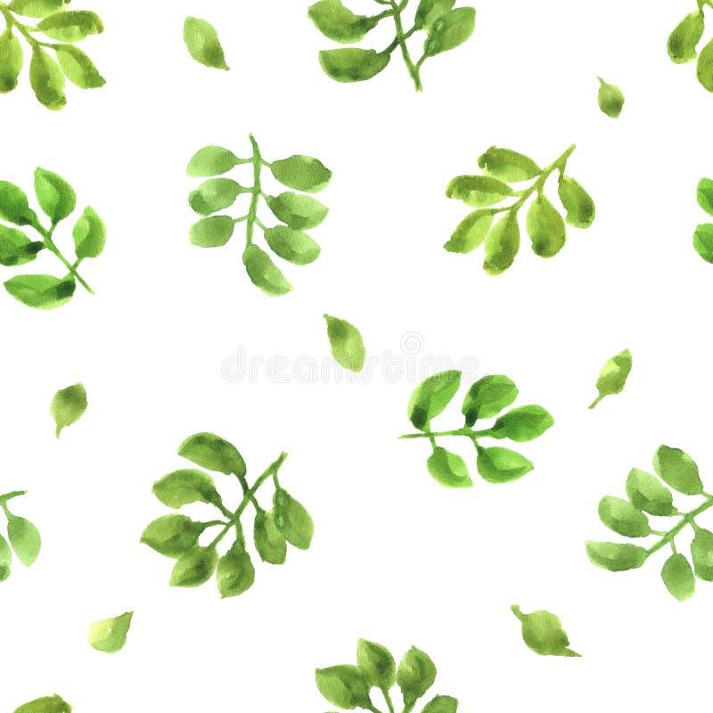 Waterverfpatroon met geïsoleerde groene bladeren stock foto's