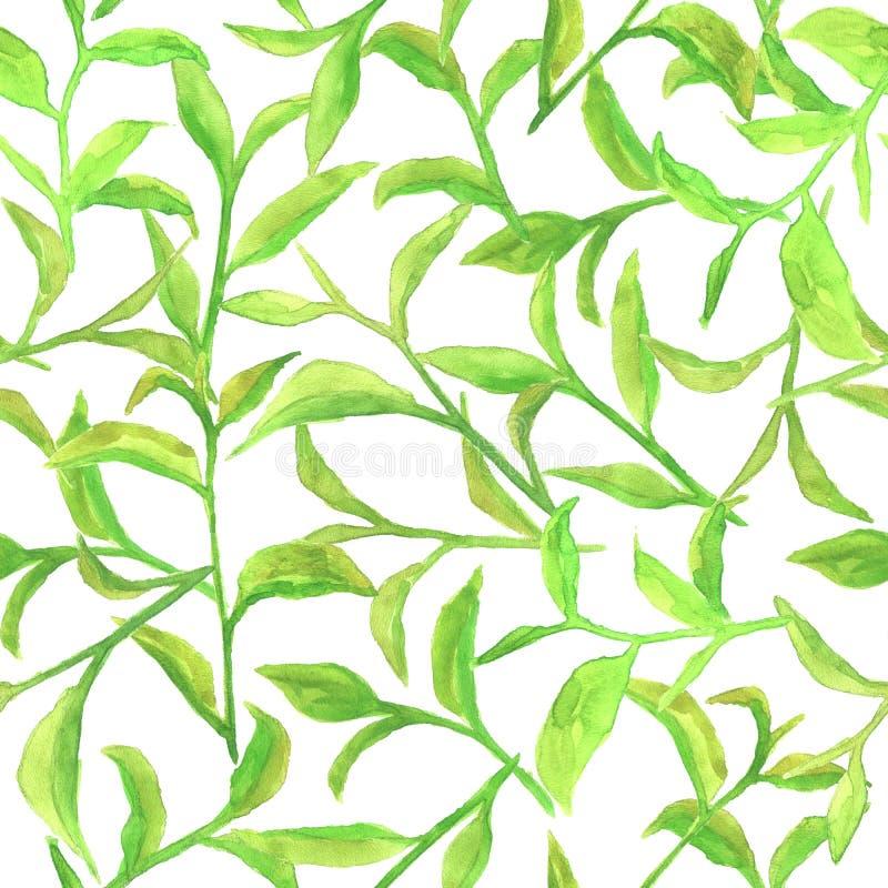 Waterverfpatroon met groene theebladen vector illustratie