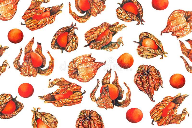 Waterverfpatroon van de bes van het physalisfruit vector illustratie