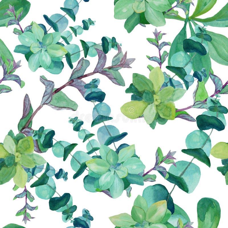 Waterverfpatroon van eucalyptus, netel, munt, succulents vector illustratie