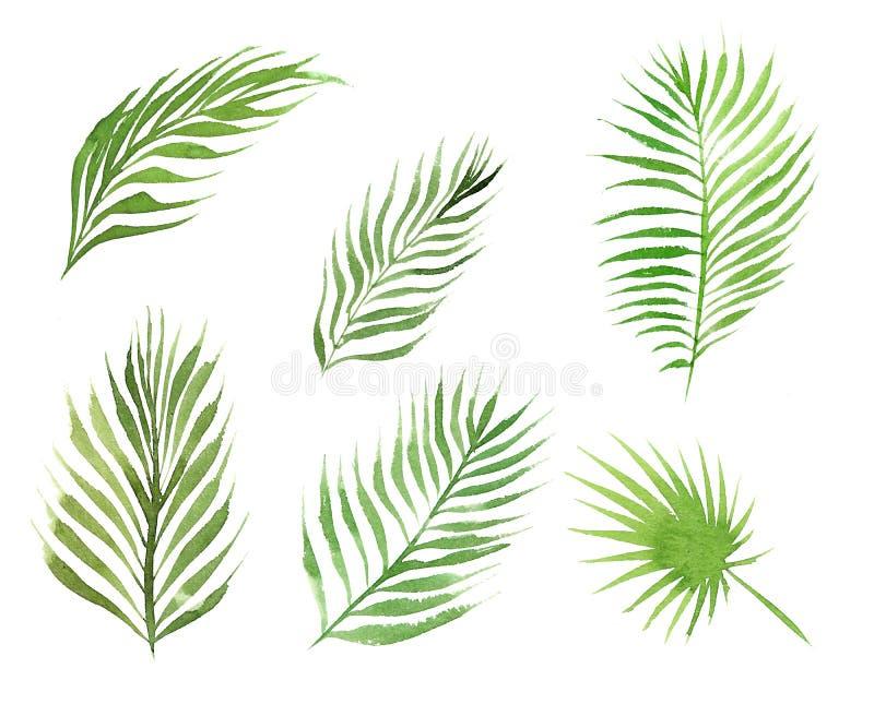 Waterverfreeks bladeren van de kokosnotenpalm op witte achtergrond wordt geïsoleerd die stock illustratie