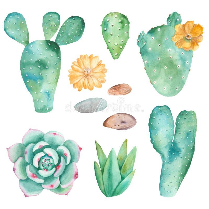 Waterverfreeks cactussen, succulents, kiezelstenen royalty-vrije illustratie