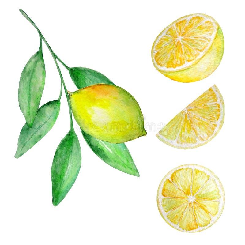 Waterverfreeks citroen en plakken vector illustratie