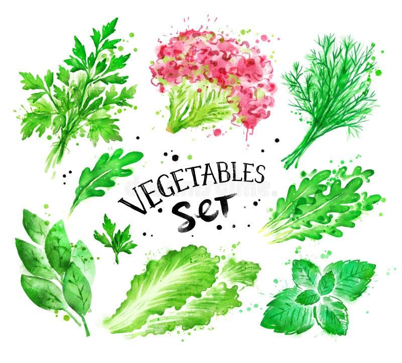 Waterverfreeks groene groenten royalty-vrije illustratie