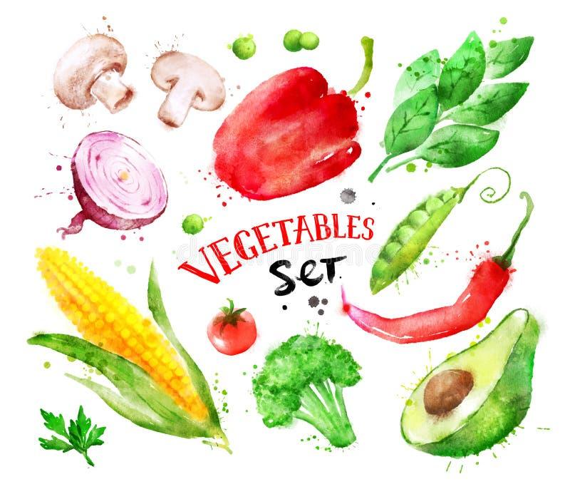 Waterverfreeks groenten royalty-vrije illustratie