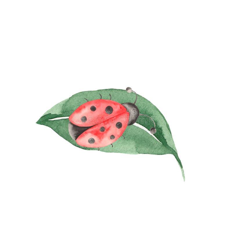 Waterverfreeks insecten, lieveheersbeestjes, beddewantsen, kevers met bladeren op een witte achtergrond stock illustratie