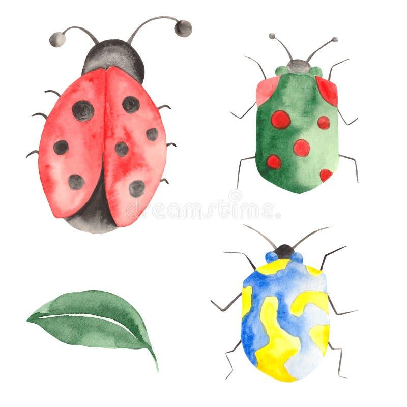 Waterverfreeks insecten, lieveheersbeestjes, beddewantsen, kevers met bladeren op een witte achtergrond royalty-vrije illustratie