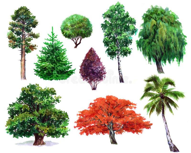 Waterverfreeks van installatieseik, struik, Japanse esdoorn, wilg, palm, sparren, geïsoleerde Pijnboom, vector illustratie