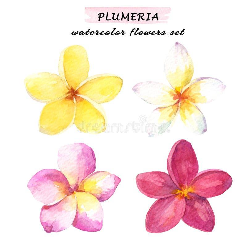 Waterverfreeks wit, geel, roze en rode plumeria tropische bloemen - Hand getrokken die illustratie op witte achtergrond wordt geï royalty-vrije illustratie