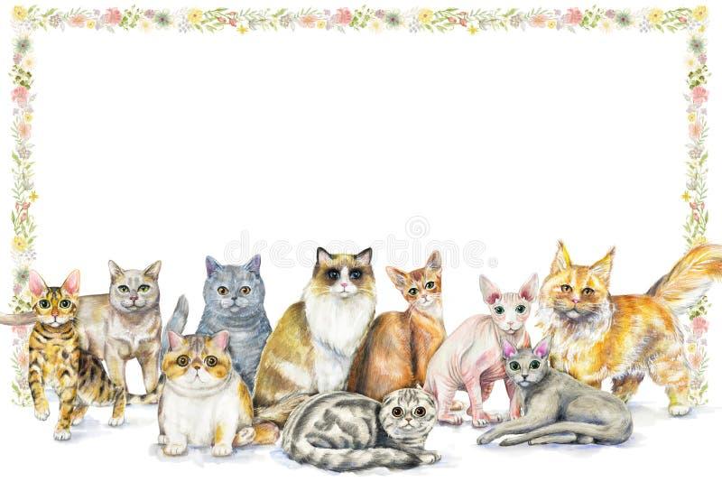 Waterverfsamenstelling met tien verschillende rassen van katten en flo vector illustratie