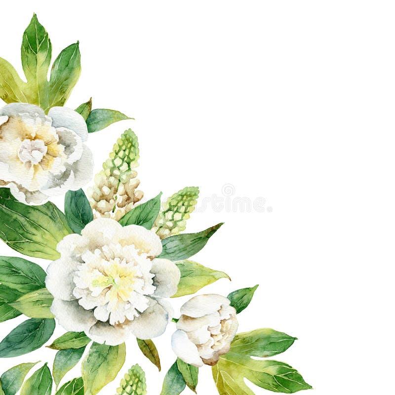 Waterverfsamenstelling met witte pioenen en lupine stock illustratie