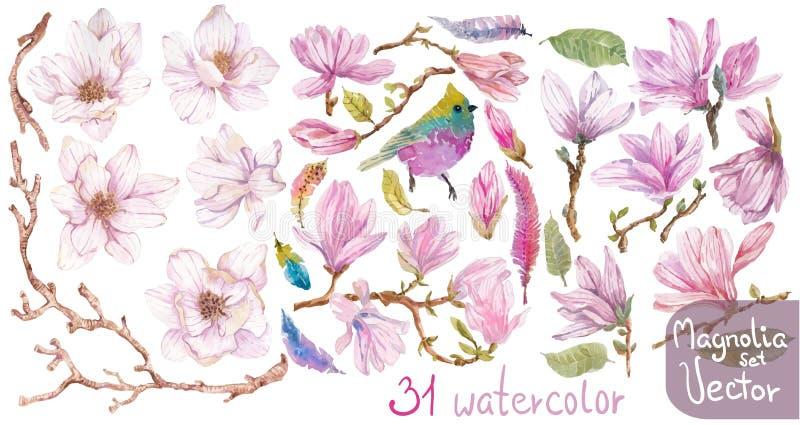 Waterverftakken van magnolia, mooie bloemen over wit stock illustratie