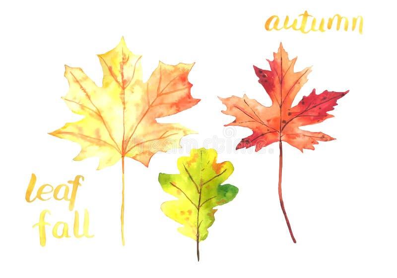 Waterverftekening van bladeren Gele, oranje en rode bladeren royalty-vrije illustratie
