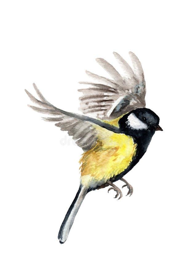 Waterverftekening van een vogel mees tijdens de vlucht royalty-vrije illustratie