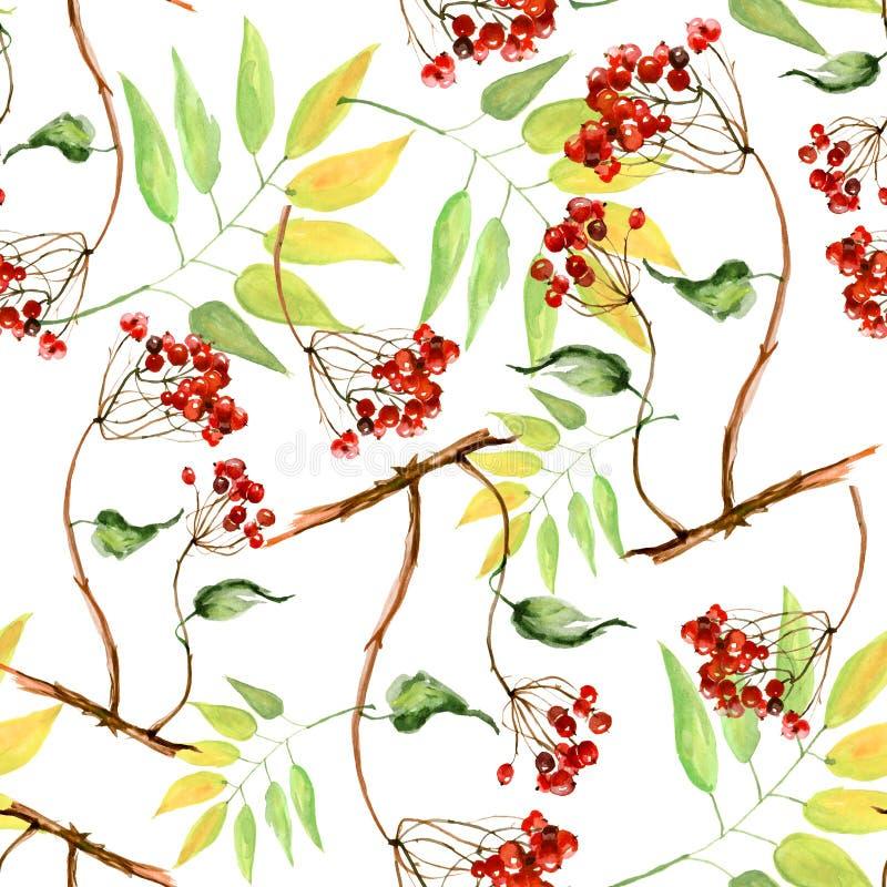 Waterverfviburnum, lijsterbes en ouder takken naadloos die patroon, hand op een witte achtergrond wordt geschilderd Tak, bos van  vector illustratie