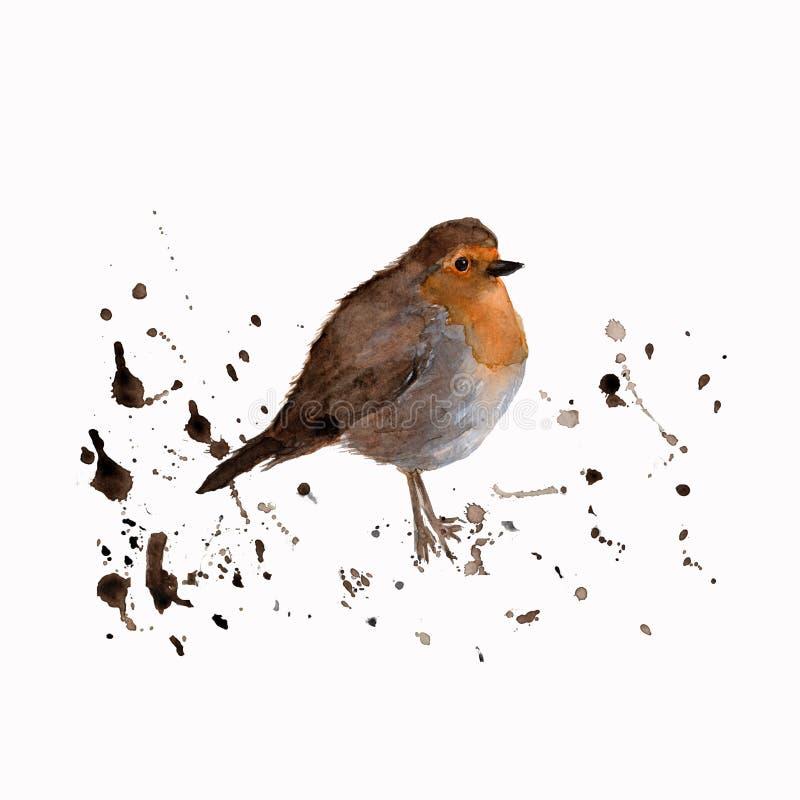 Waterverfvogel - Robin De kleurrijke illustratie van de waterkleur Geïsoleerd op de witte achtergrond Waterverfhand van een vogel vector illustratie