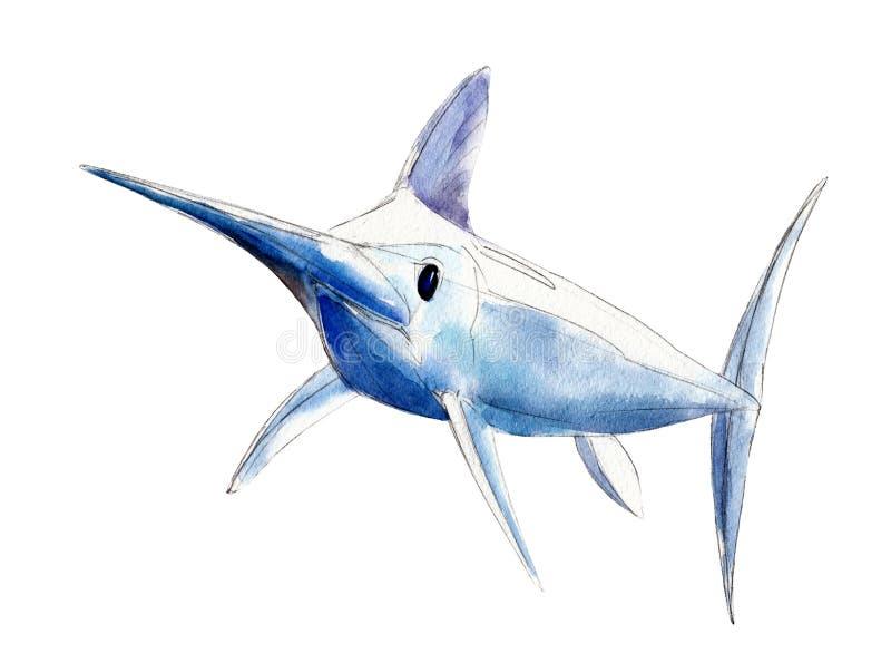 Waterverfzwaardvissen, blauwe die marlijn, hand-drawn illustratie op wit wordt geïsoleerd stock illustratie