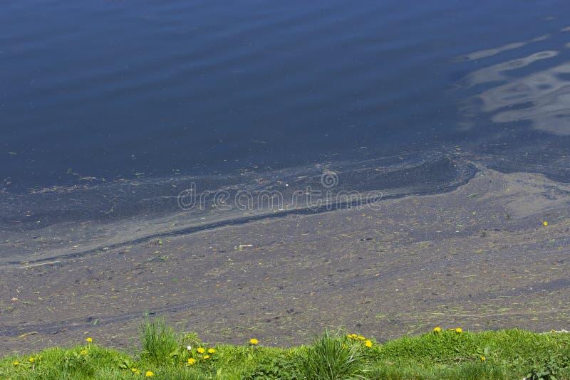 Watervervuiling, milieuproblemen De dikke olieachtige modder drijft dichtbij de kust van vijvermeer Stookolie en afgewerkte olied stock afbeeldingen