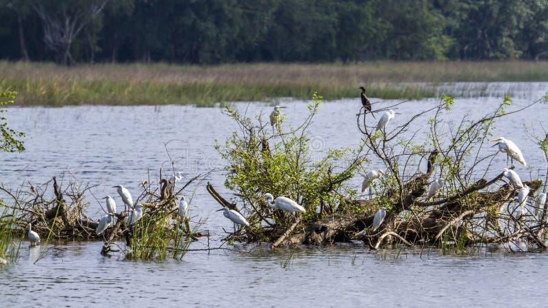 Watervogels in Minneriya-reservoir, Sri Lanka stock foto