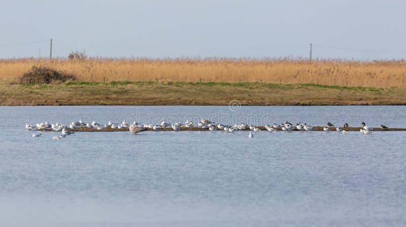 Watervogels op sandbar royalty-vrije stock afbeelding