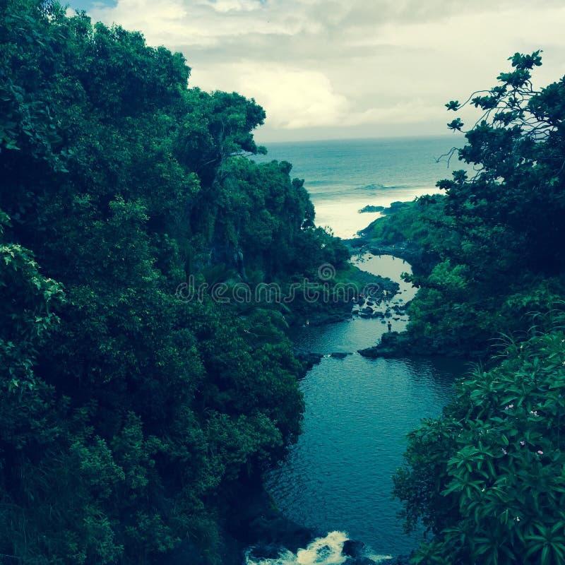 Waterway in Maui, Hawaii. Lush vegetation around inland waterway on Maui, Hawaii stock photo