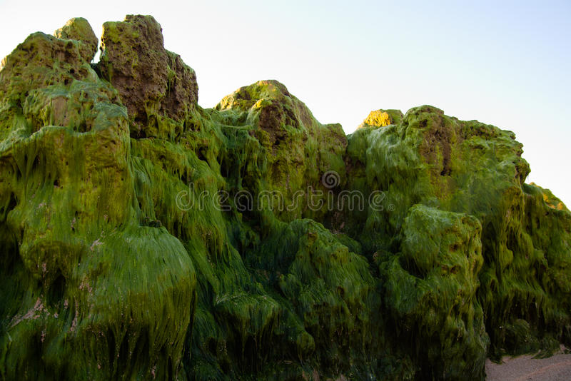Waterweedfelsen lizenzfreies stockfoto