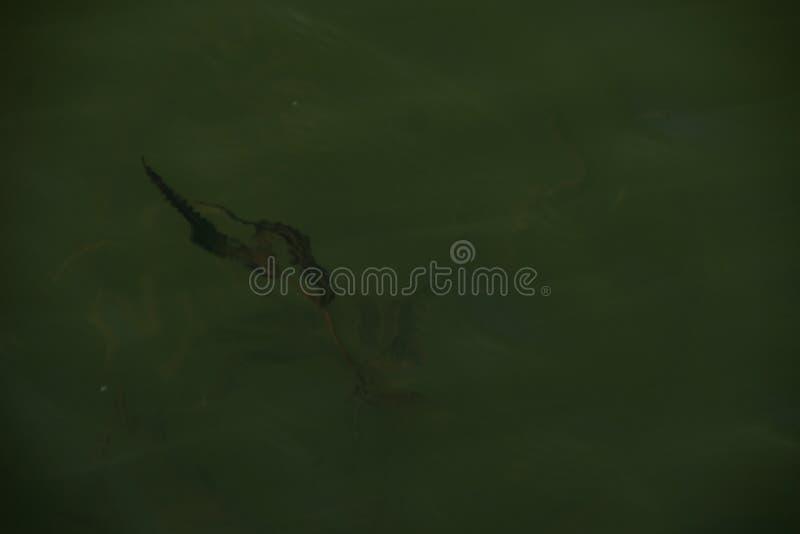 Waterweeds zdjęcie royalty free
