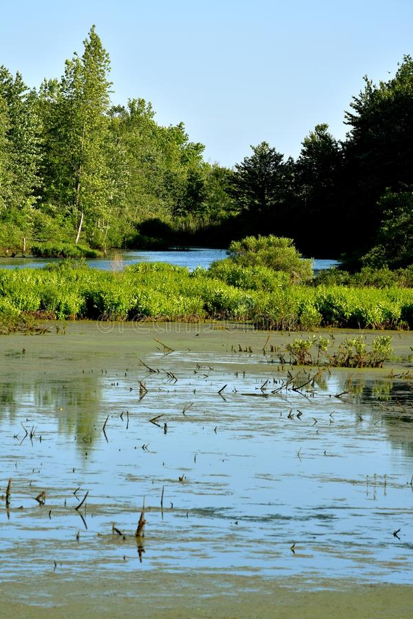 Watery Marsh Swamp And Forest. A Watery Marsh Swamp And Forest royalty free stock photo