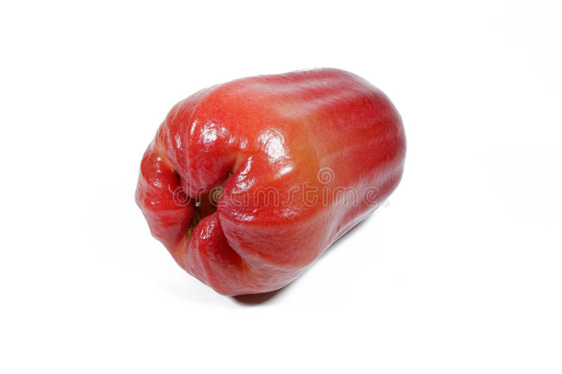 Watery Rose Apple royalty free stock photos